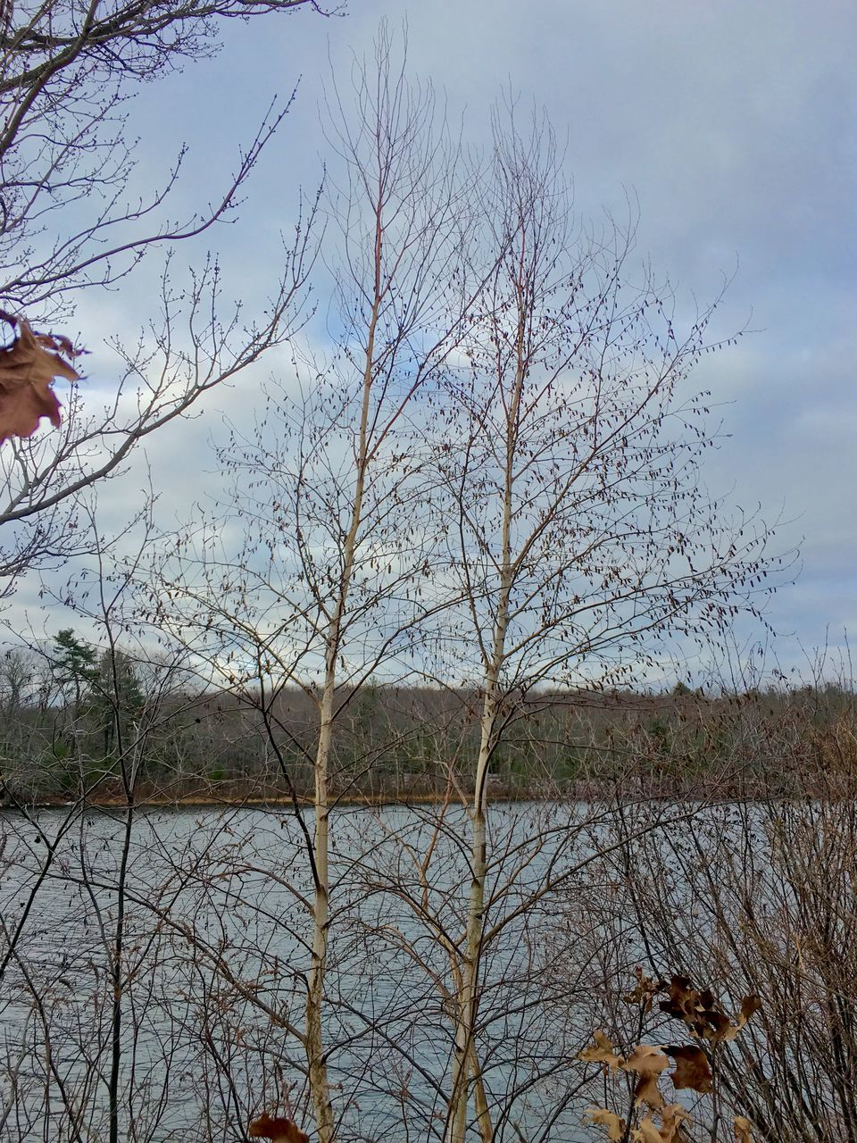 tree, lake, bare tree, nature, sky, outdoors, water, tranquil scene, beauty in nature, tranquility, day, growth, cloud - sky, no people, scenics, branch