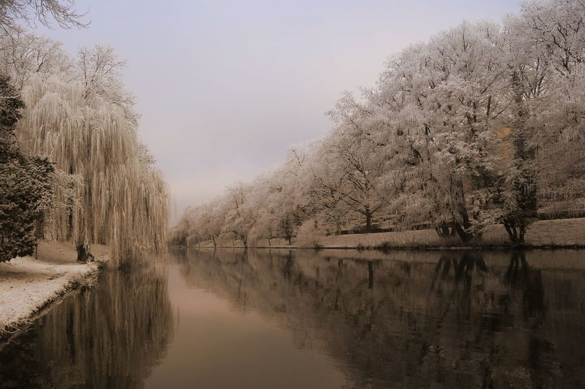 Just another Winter Shot Tree Reflection Nature Water Beauty In Nature Tranquility Tranquil Scene Scenics Idyllic Waterfront Bare Tree Lake Outdoors Growth No People Day Sky Winter Heilbronn Heilbronn Germany Neckar River Travel Destinations Eye4photography  The World In My Sight