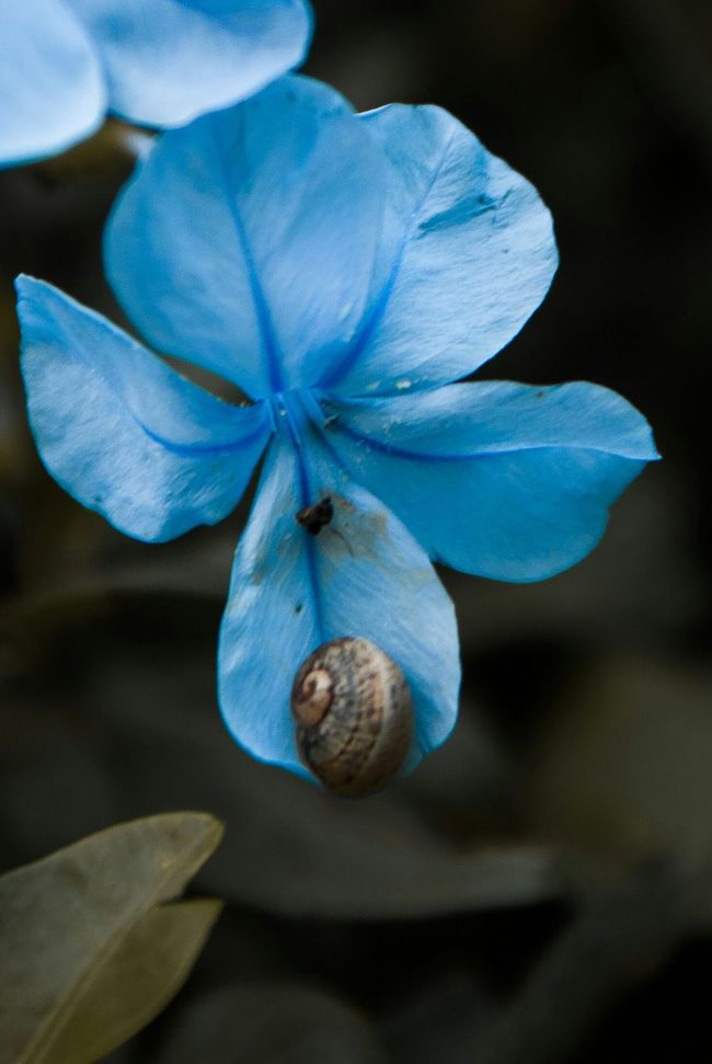 El nunero de oro Caracolimpico Flor Azul Pequeñito San Angel Mexico City Fotowalk