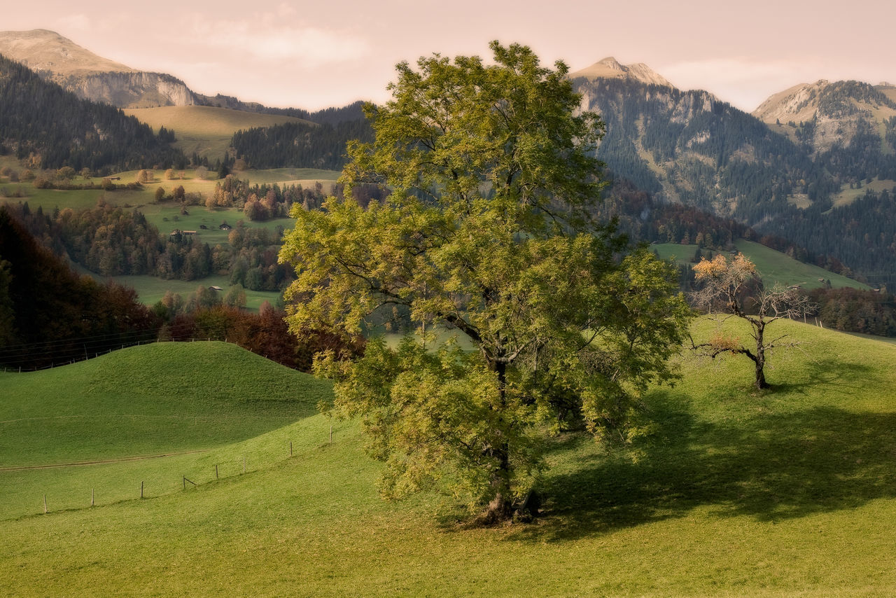Abgestorbener Baum Atum Baum Berge Green Grün Herbstbäume Herbststimmung Landscape Landschaft Mountain Nature No People Outdoors Paar Simmental Tree