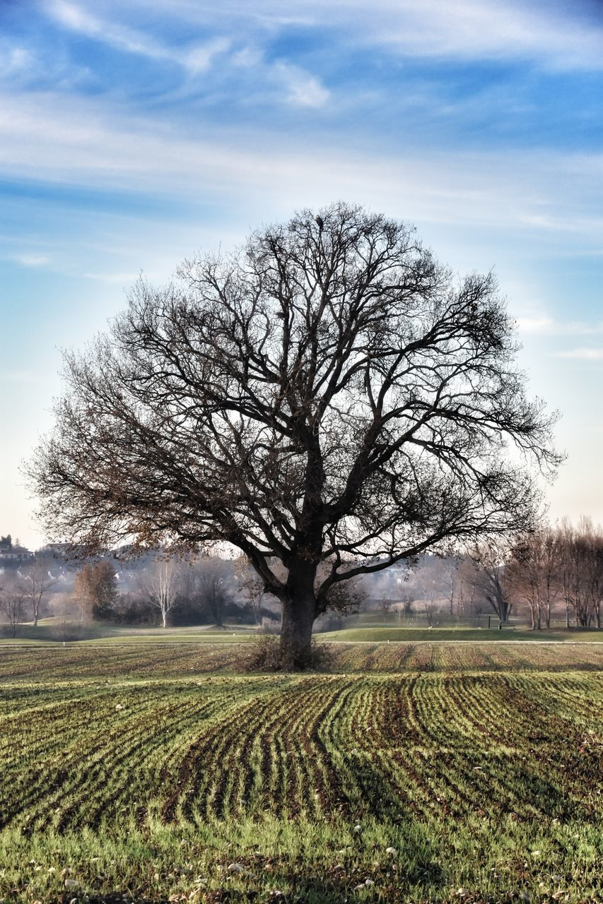 tree, bare tree, landscape, beauty in nature, field, tranquility, nature, sky, tranquil scene, lone, day, cloud - sky, scenics, outdoors, rural scene, no people