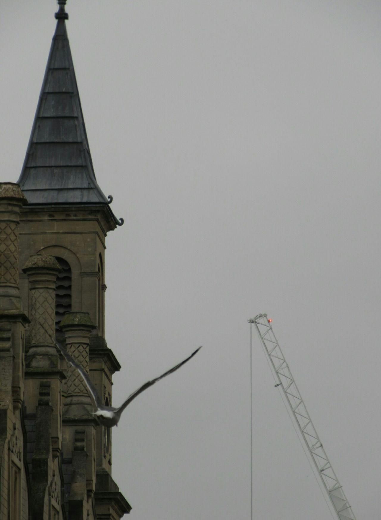 Flying by SEAGULL IN FLIGHT Bird Bird Photography Church Buildings Church TowerChurch Architecture Construction Crane Grey Sky Bath England