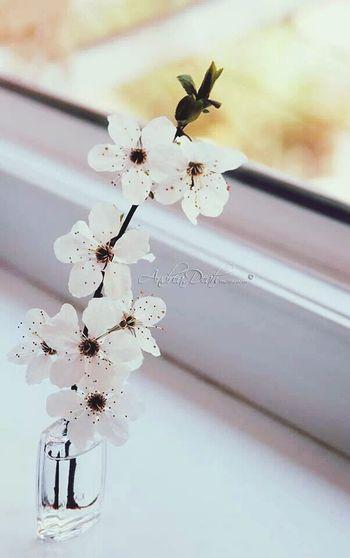 The plants are awake, so I'm awake... Spring Child Flower Spring