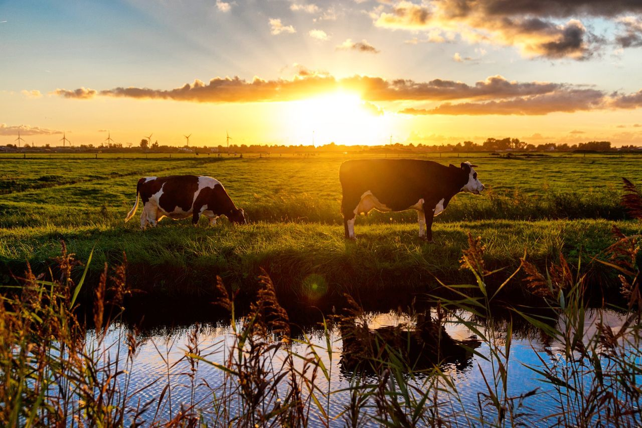 Sunset Agriculture Reflection Field Rural Scene Nature Outdoors Water Sky Water Buffalo Lake No People Rice Paddy Animal Themes Domestic Animals Landscape American Bison Mammal Day