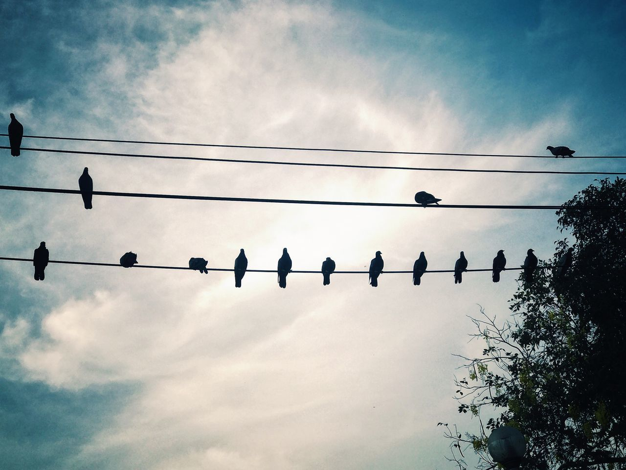 Low Angle View Sky Cloud - Sky Bird Cable Flying Power Line  No People Outdoors Day Animal Themes Power Supply Large Group Of Animals Animals In The Wild Nature Silhouette Tree Flock Of Birds Taken By IPhone 7 Plus