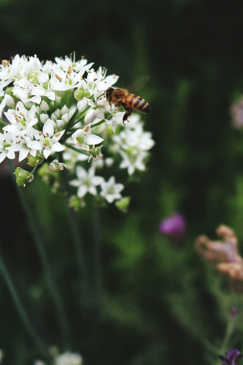 insect, flower, bee, one animal, animal themes, animals in the wild, nature, honey bee, pollination, fragility, wildlife, buzzing, growth, freshness, beauty in nature, outdoors, day, animal wildlife, plant, no people, flying, close-up, flower head