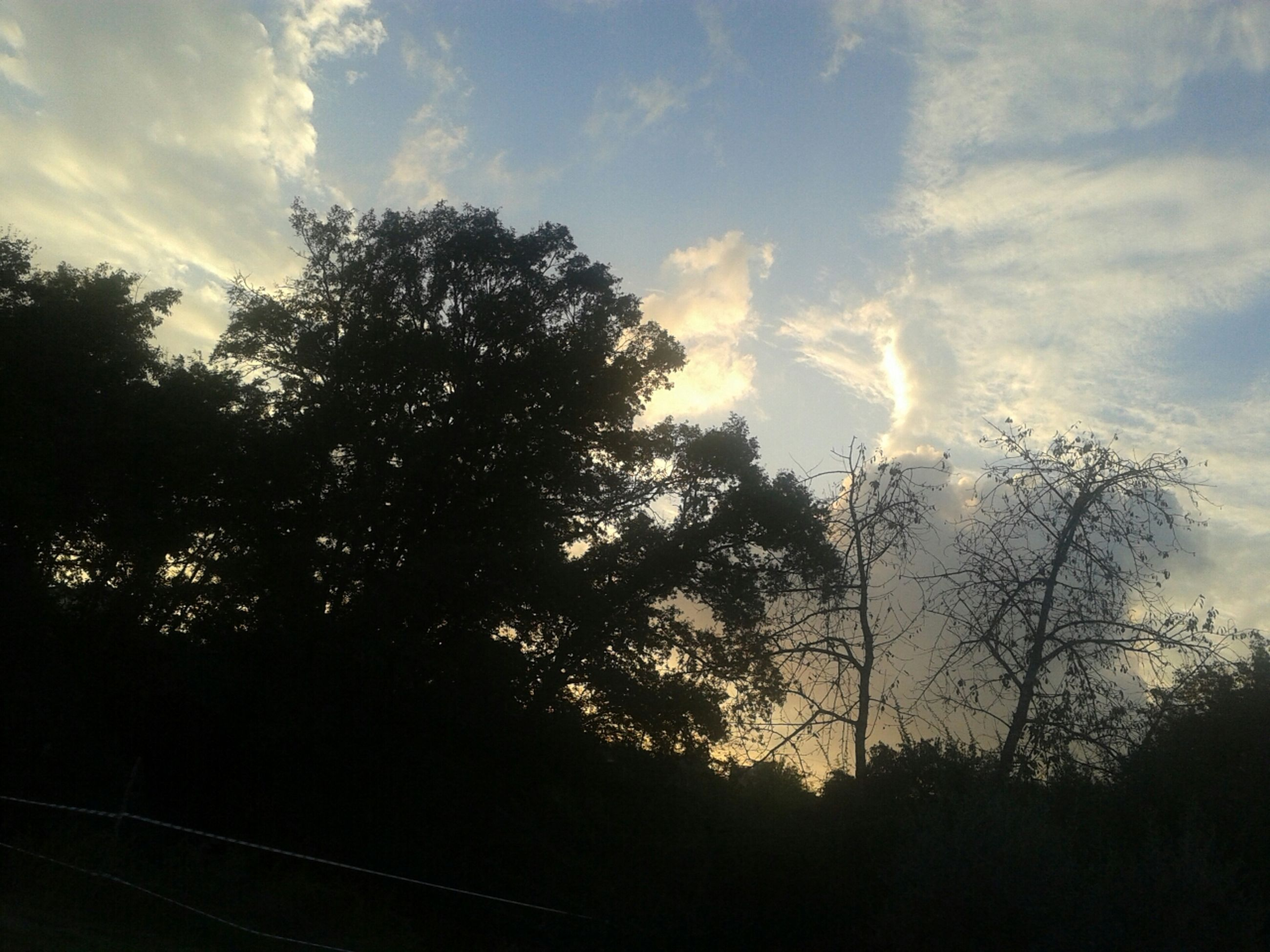 tree, sky, silhouette, cloud - sky, tranquility, low angle view, beauty in nature, nature, tranquil scene, scenics, growth, cloudy, cloud, no people, branch, outdoors, sunset, sunlight, day, bare tree