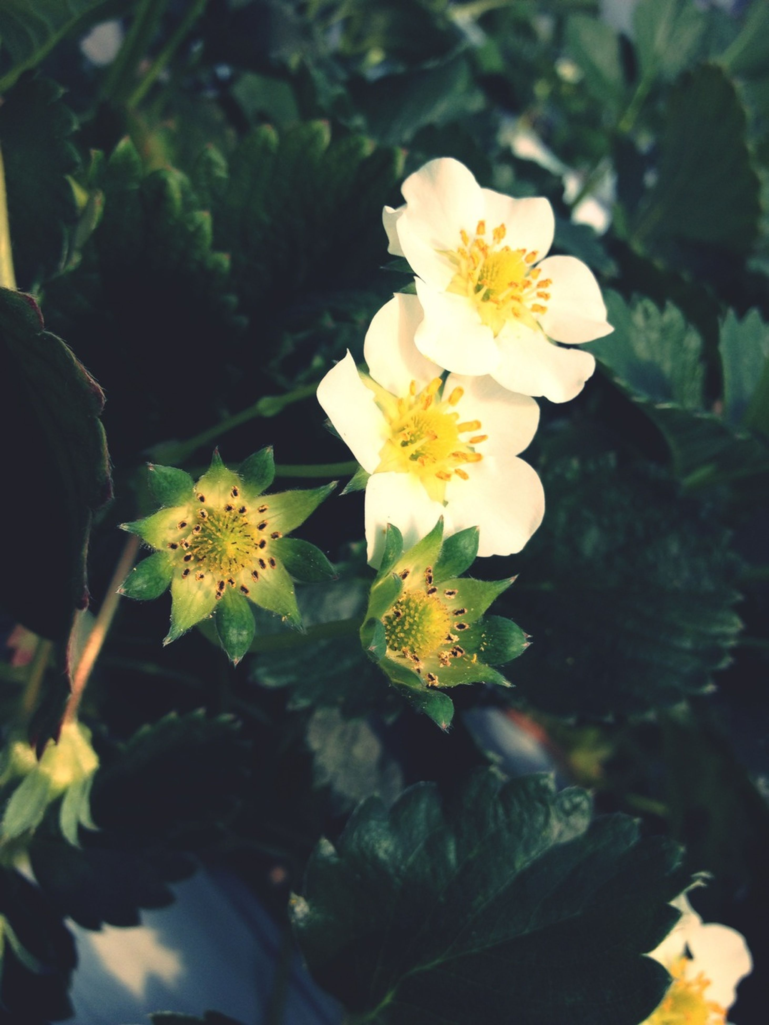 flower, petal, freshness, flower head, fragility, yellow, beauty in nature, growth, blooming, plant, close-up, pollen, nature, white color, focus on foreground, leaf, in bloom, blossom, outdoors, day