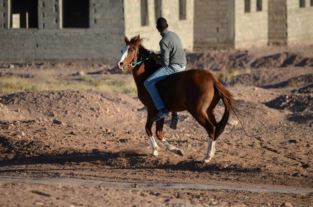 Horse One Animal Horseback Riding Full Length One Person Animal Themes Livestock Animal Working Animal Domestic Animals Nature Outdoors People Only Men Jockey Day Tail Teenager Boy Brown Desert Morocco Ouarzazate