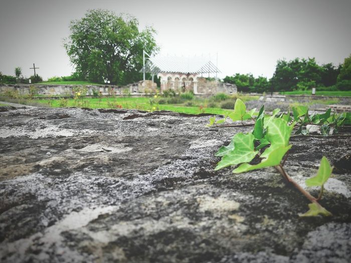 Nature Ruins Debris Photography Photooftheday Pic Picture Outside Photo Photoshoot Photo Of The Day Day