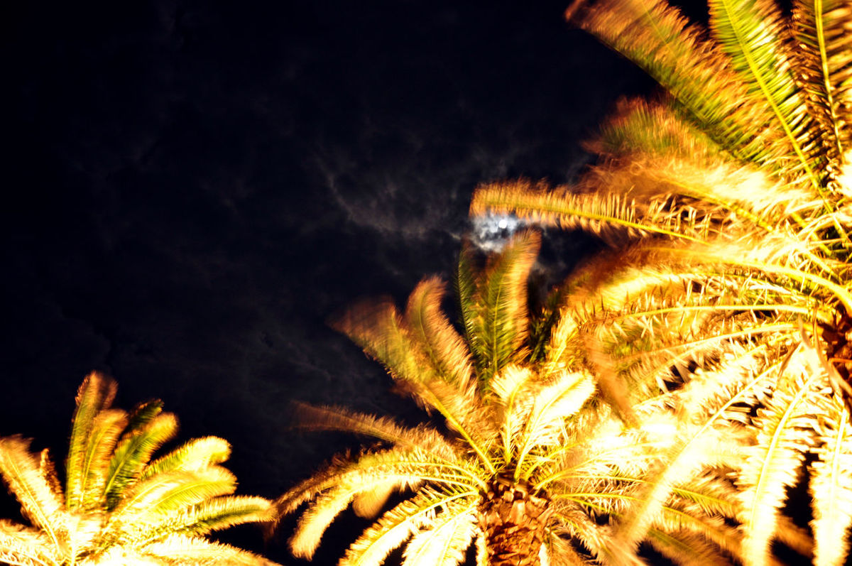 Beauty In Nature Low Angle View Nature Night Lights Night Lights # Parkinglot #dark #lowlight Night Lights Bokeh Starry Sky Light & Shadow Night View Palm Trees Palm Trees And Night Skyline Palm Trees On The Beach Nature Palm Trees ❤❤ Selective Focus Sky