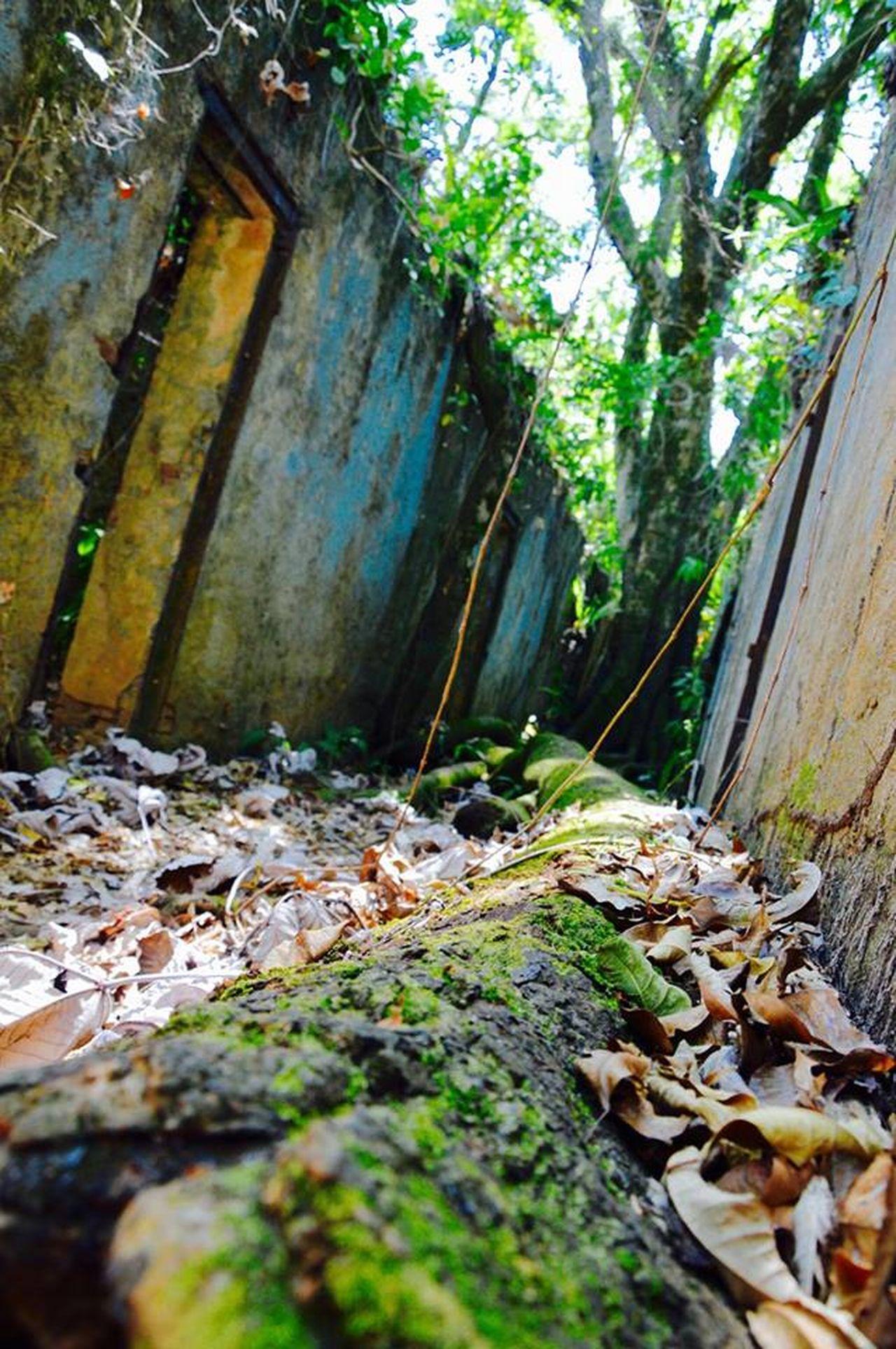 Nature Guyana Ameriquedusud Savage Guyane Francaise Amazonia Dangerous Southamerica Ilesdusalut
