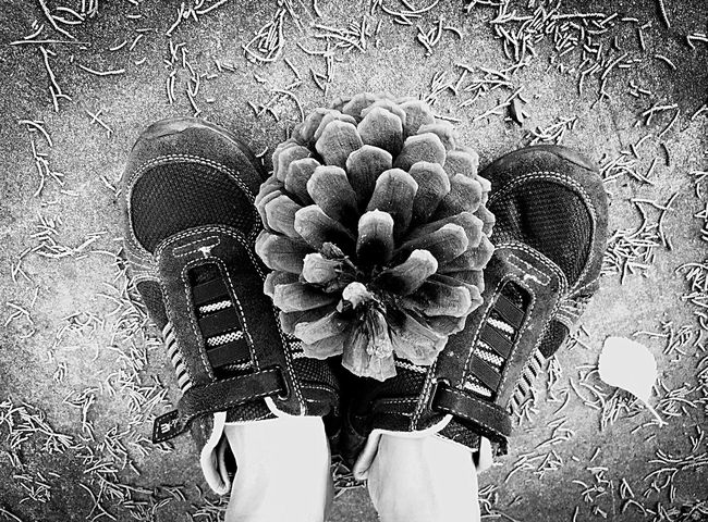 Two Is Better Than One Shoes Feet Foot Pine Cone Floor Concrete Concrete Floor Black And White Home And Garden California Tree Leaves A Bird's Eye View