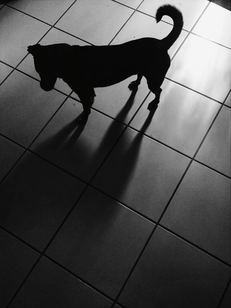 High Angle View Of Dog On Tiled Floor