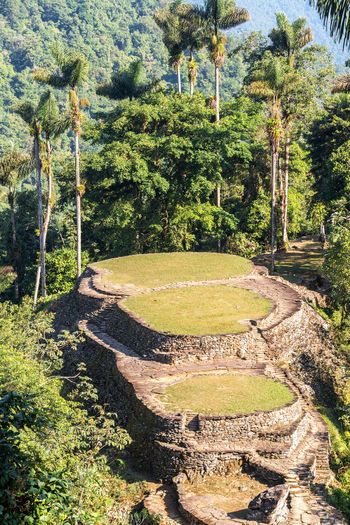 Ancient city of Ciudad Perdida near Santa Marta, Colombia Ancient Ciudad Colombia Culture Famous Forest High Indigenous  Jungle Landmark Lost City Nature Old Perdida Place Remote Rock Ruin Santa Marta Structure Terraced Tourism Traditional Trail Travel