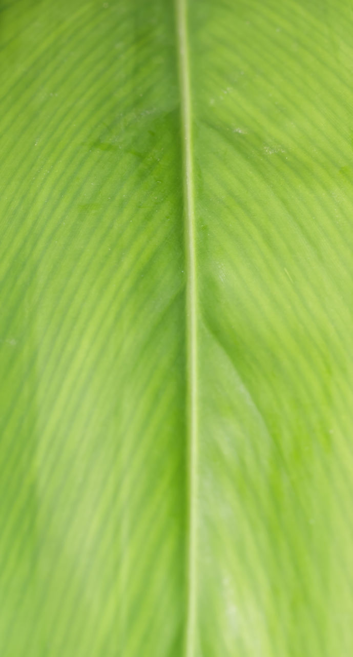 green color, leaf, full frame, nature, backgrounds, beauty in nature, growth, no people, close-up, day, fragility, freshness, outdoors, frond, banana leaf, grass, animal themes