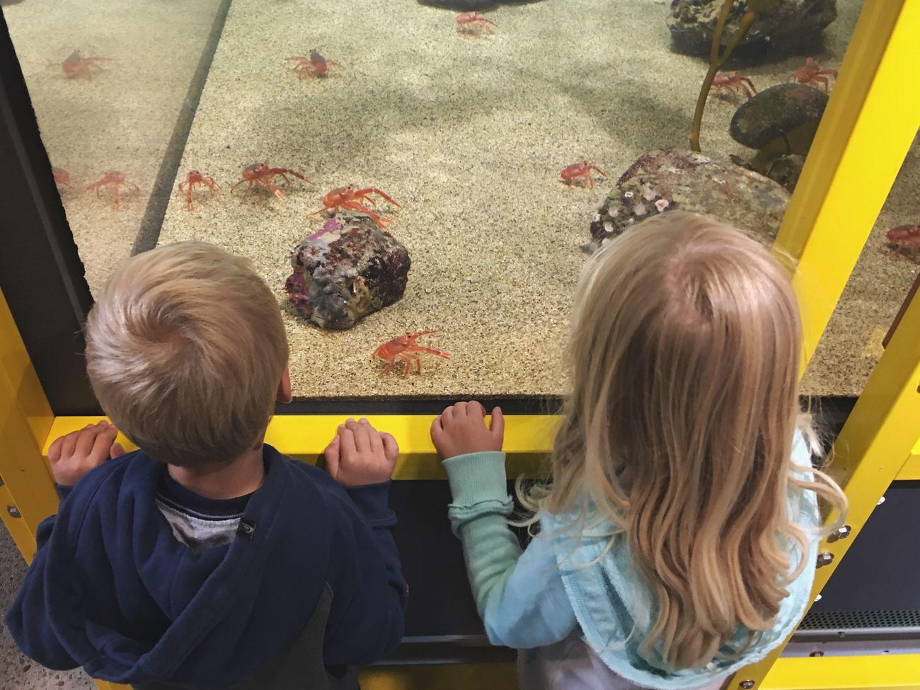 Aquarium Children Siblings Crabs Red Crab Learning Preschoolers Seymour Marine Center Santa Cruz California United States Two Is Better Than One