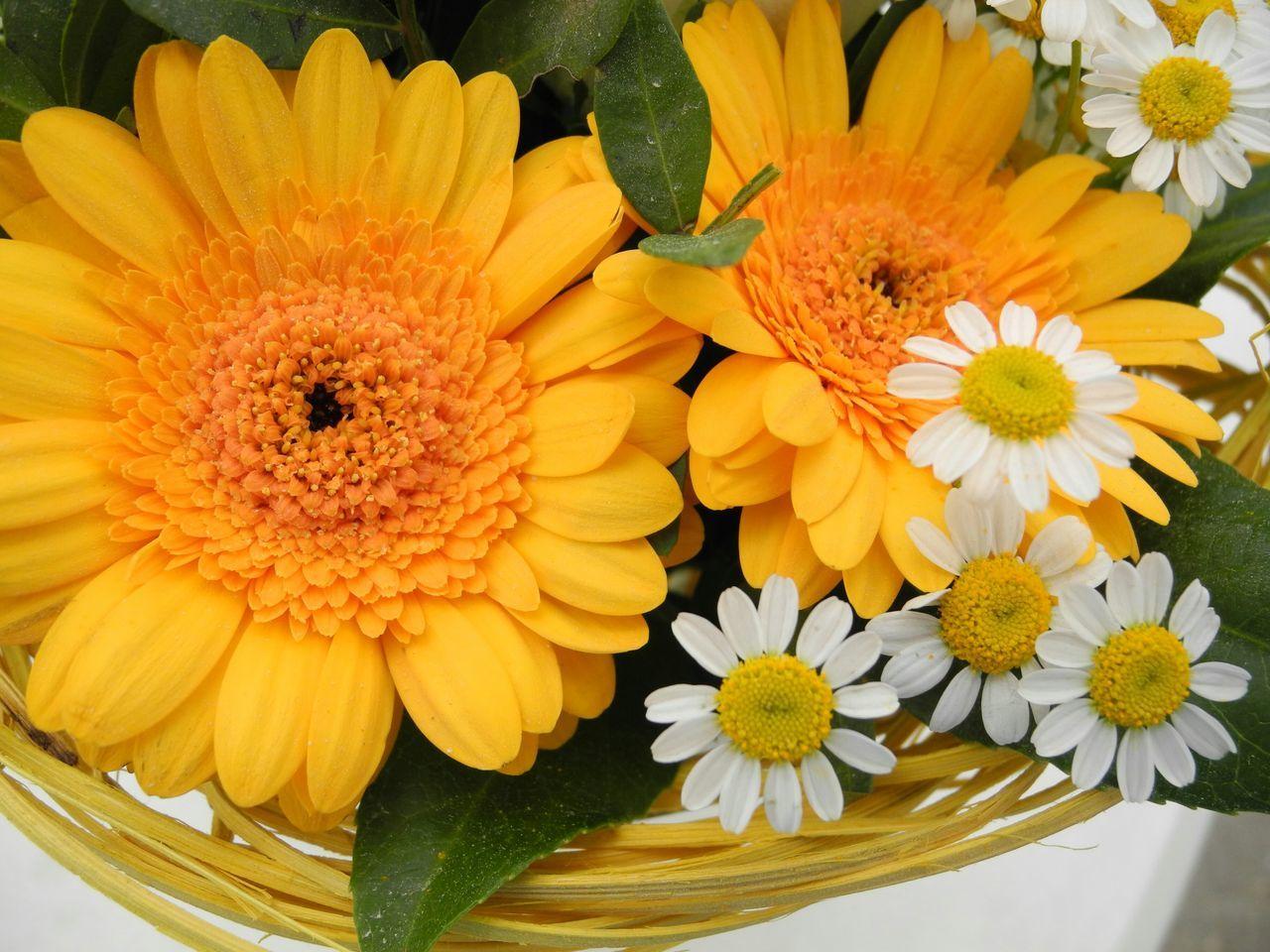 EyeEm Best Shots - Flowers Flower Bouquet  Birthday Flowers Flower Photography Bouquet Of Flowers Flower Collection Bouquet