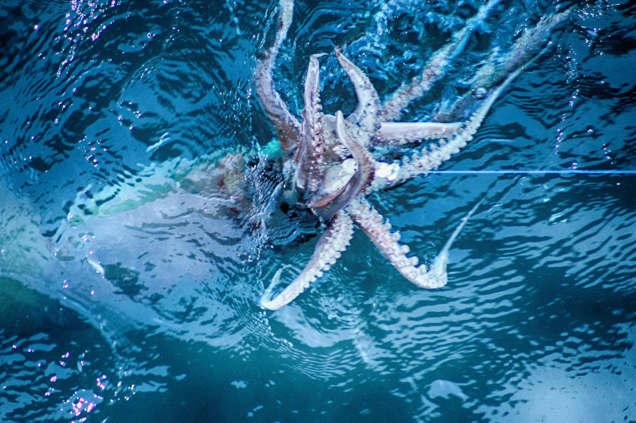 High Angle View Of Octopus Swimming In Sea