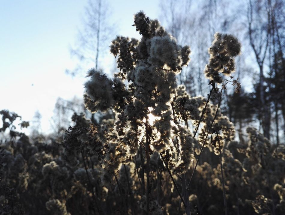 Beauty In Nature Flower Nature Frozen Nature Frozen Flower Poland Warsaw Cold Ice Flower Ice Ice Nature Sunny Winter