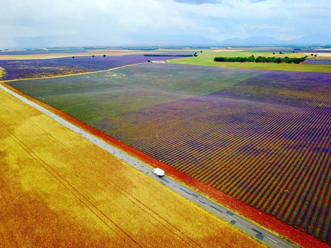 Levander fields Agriculture Field Farm Landscape Rural Scene Scenics Crop  Nature Tranquil Scene Beauty In Nature Day Sky No People Outdoors Growth Patchwork Landscape