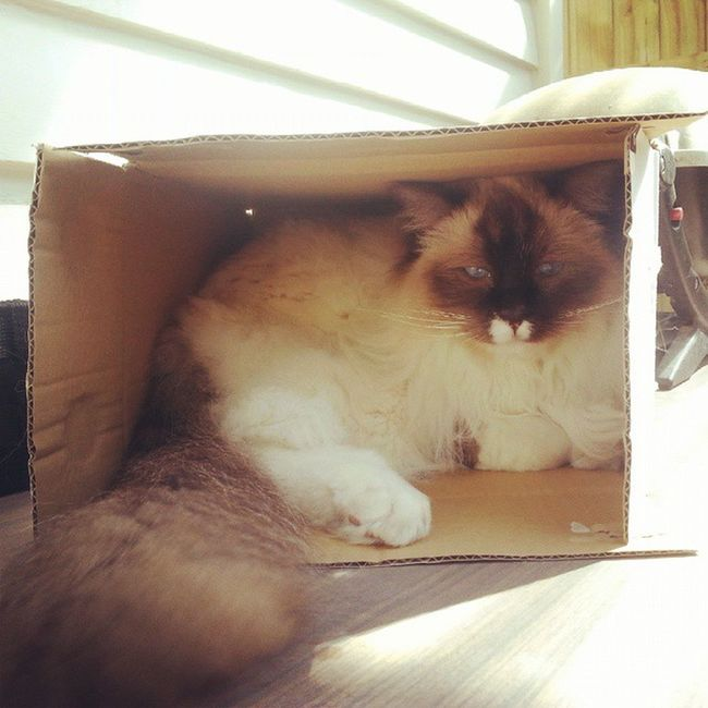 Cat in a box. Pets Furbaby Theadventuresofpuck