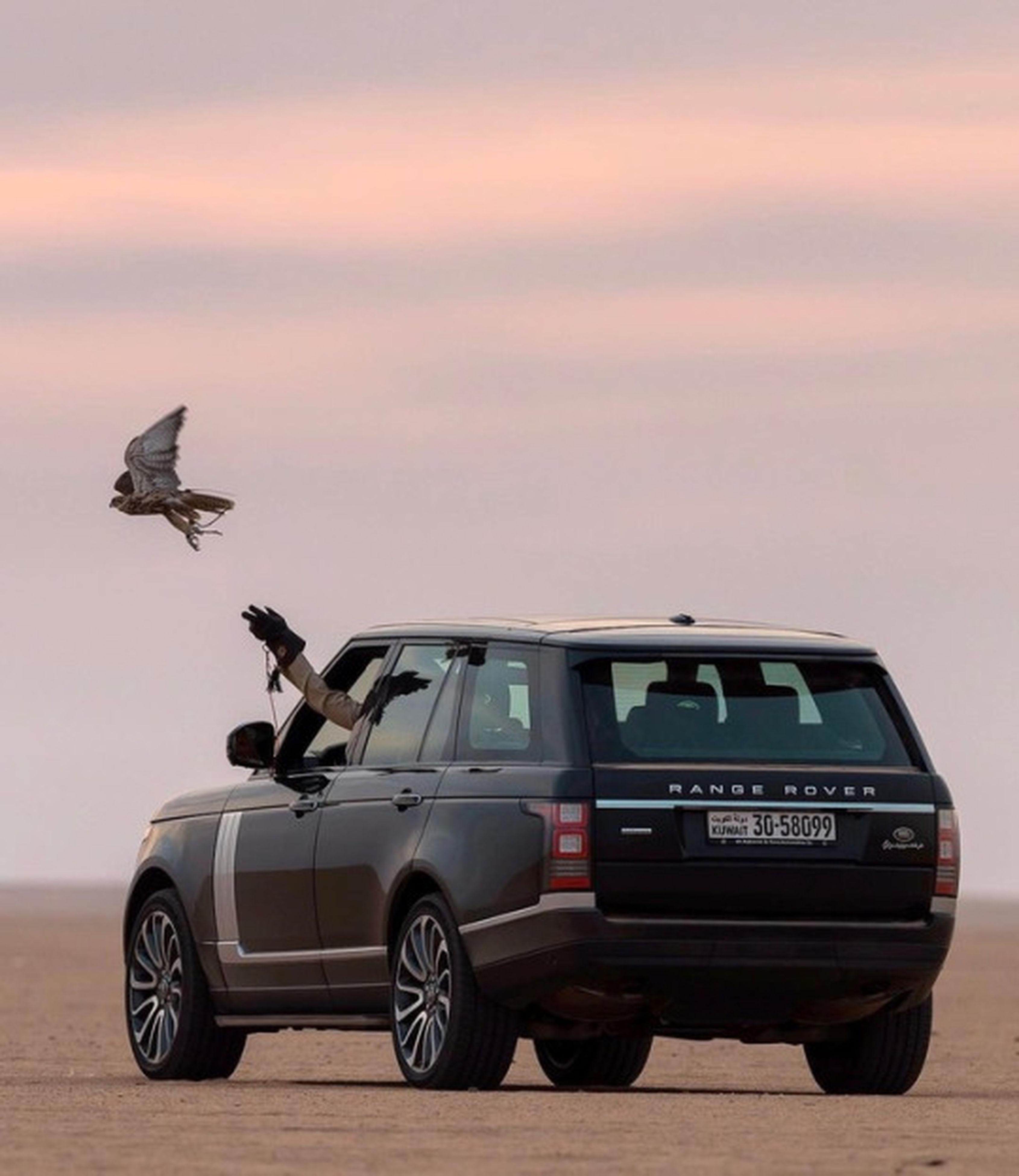 car, transportation, animal, no people, animal wildlife, sunset, outdoors, day