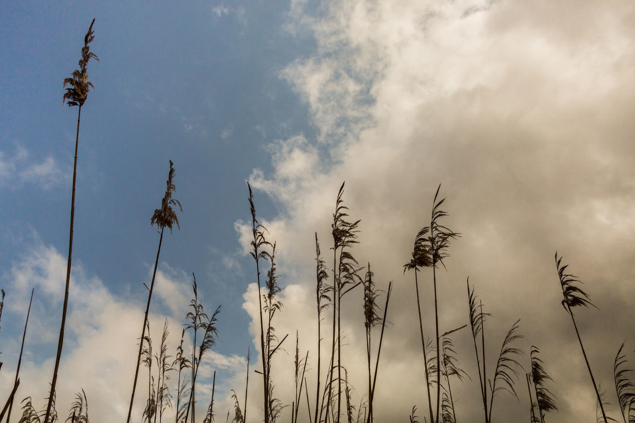 growth, nature, no people, sky, day, cloud - sky, plant, outdoors, beauty in nature, tranquility, low angle view
