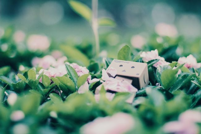 Spring Nature Check This Out Color Vscocam 30天日系练习 滇青 Japan Green Enjoying Life Danboard Flower 美丽的大自然