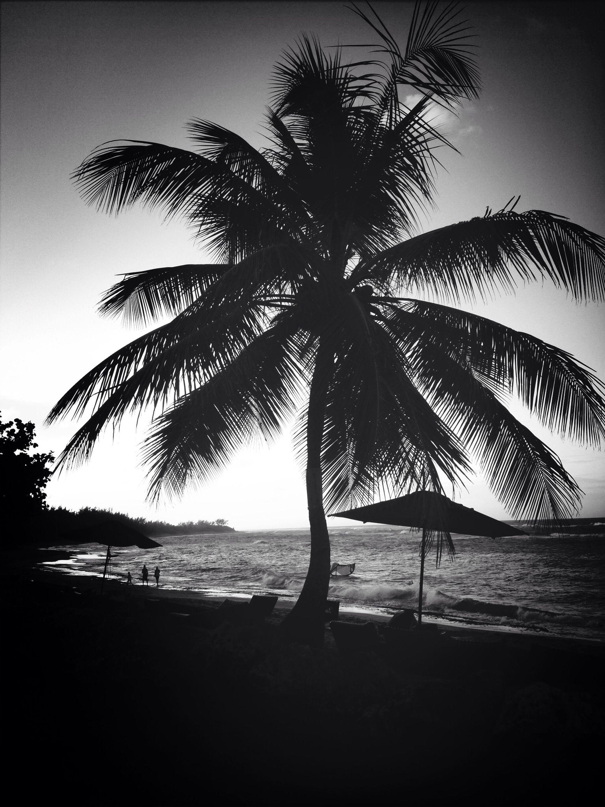 Holiday Beautiful Surroundings Puerto Rico Beach