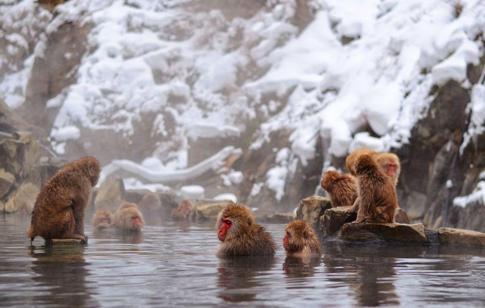Beautiful stock photos of affe, Animal Themes, Animal Wildlife, Animals In The Wild, Brown