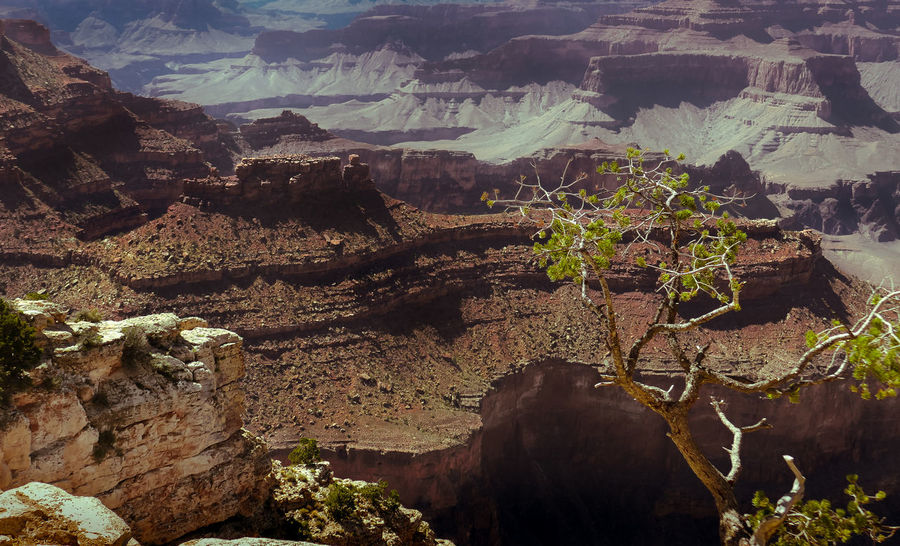 No words can describe the beauty of the Grand Canyon. Arizona Grand Canyon National Park Rock Travel Traveling United States View Adventure Beauty In Nature Close-up Colorful Day Moody Mountain Nature No People Outdoors Physical Geography Plant Purple Sky Rock - Object Scenics South Rim Tree First Eyeem Photo