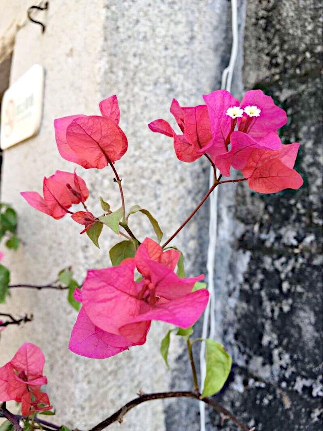 Flower MissSummer MissSummerTime 🌼 Went To.. Xiamen