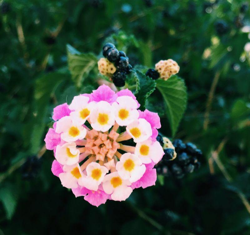 Flowers Summertime Pink Flower EyeEm Nature Lover Naturelovers Taking Photos Beautiful Nature