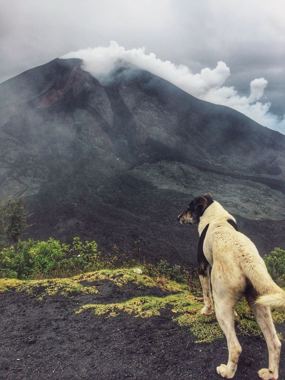 The highly active Pacaya Vocano and the most frequently climbed volcano in Guatemala! Mountain One Animal Animal Themes Dog Domestic Animals Pets Mammal Landscape Nature Sky Mountain Range Cloud - Sky Outdoors Day Tranquility Beauty In Nature Scenics No People Pacaya Guatemala Antigua Guatemala
