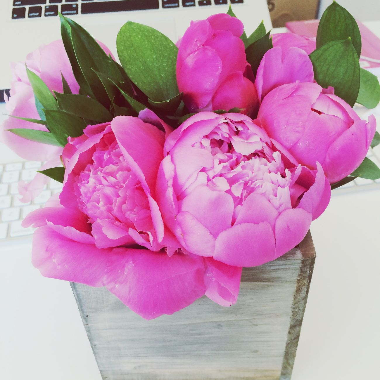 Pretty, pretty peonies. Thanks @drew!