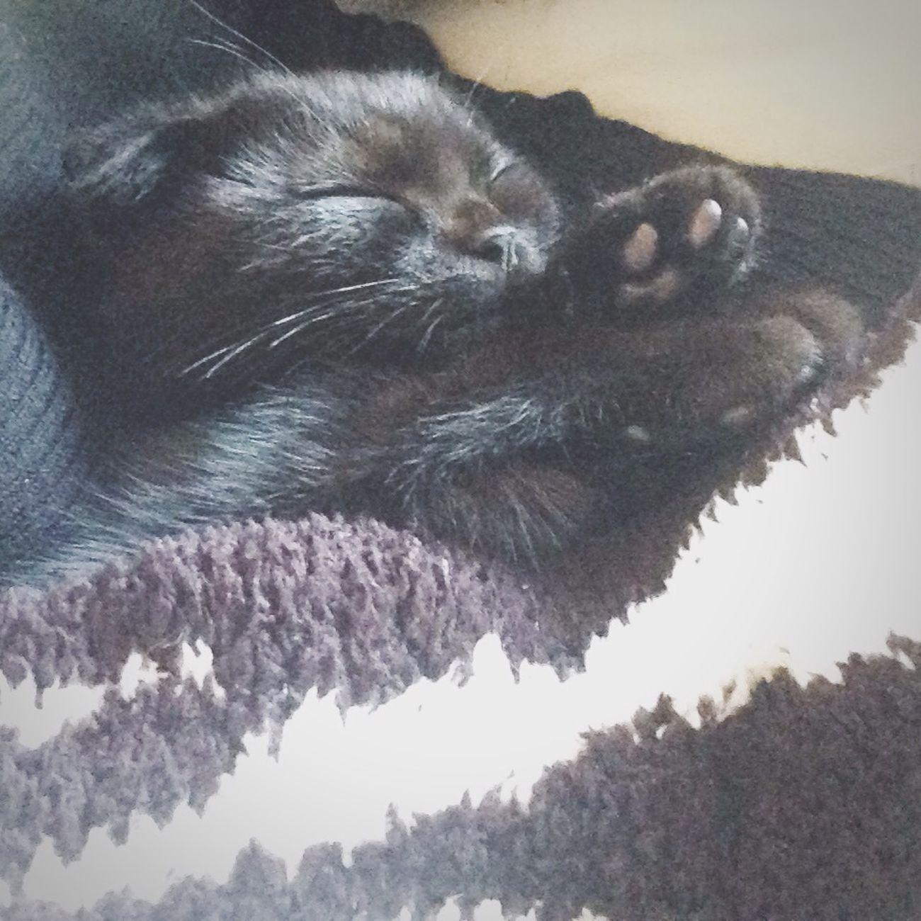 お昼寝 しあわせ 猫 黒猫 スコティッシュフォールド Cat♡ Enjoying Life Tokyo,Japan 腕まくら ??