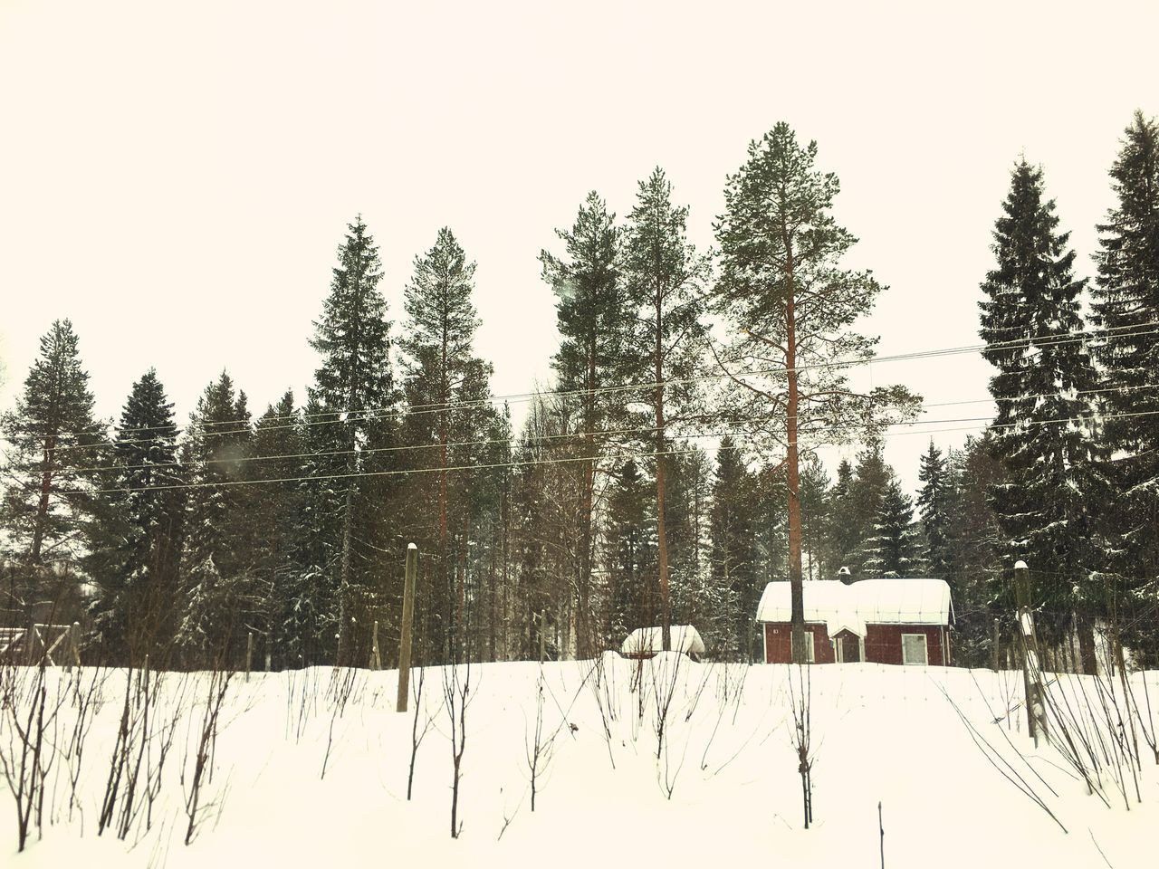 snow, winter, cold temperature, tree, nature, tranquility, weather, tranquil scene, beauty in nature, no people, white color, scenics, frozen, landscape, day, outdoors, forest, sky