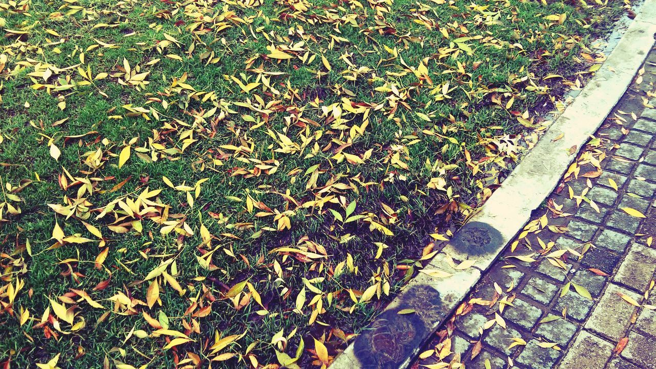 leaf, high angle view, autumn, day, grass, nature, outdoors, growth, green color, no people, plant, low section, close-up