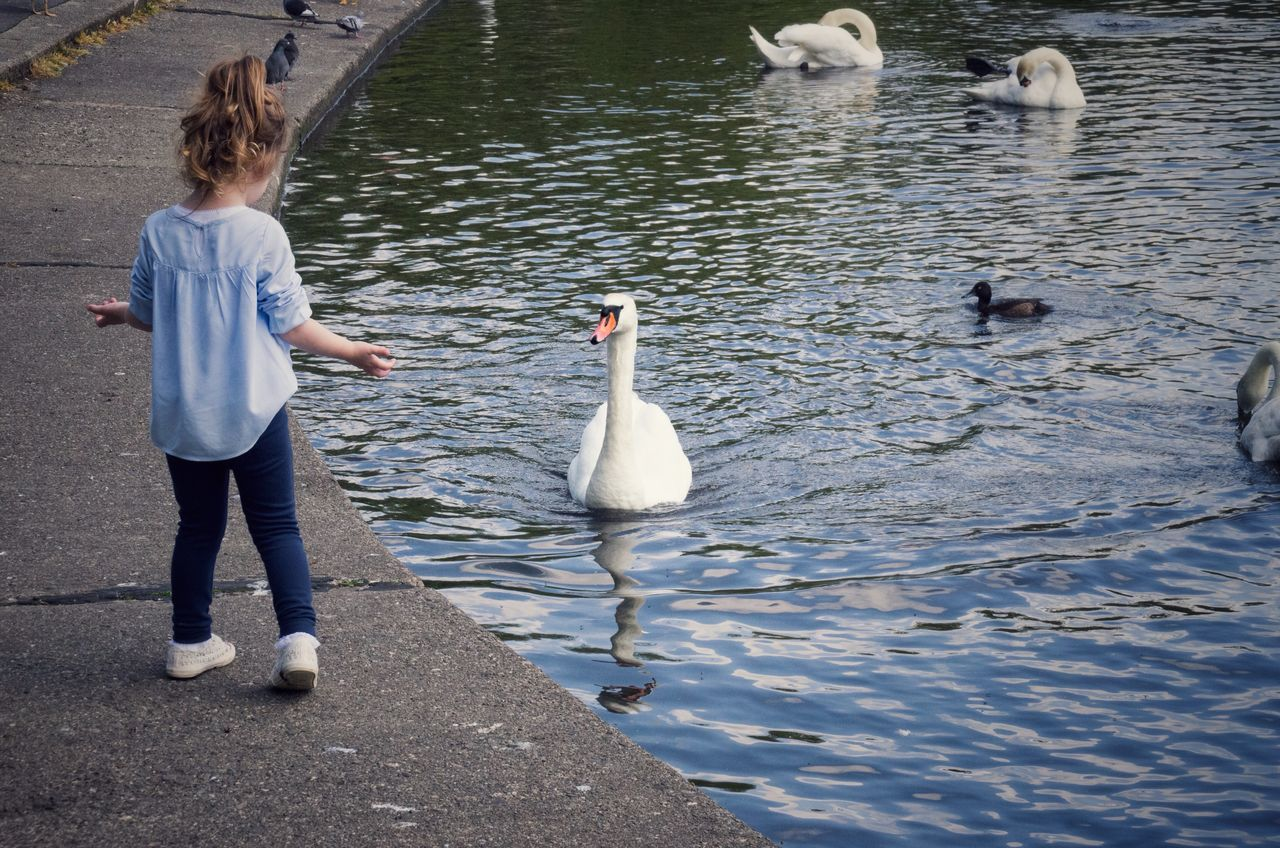 Beautiful stock photos of vogel, animal themes, bird, water, full length