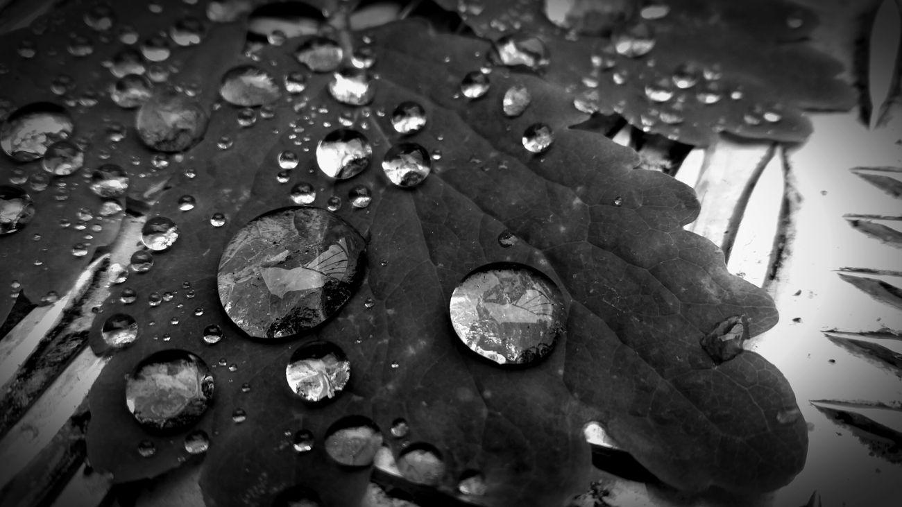 Blackandwhite Photography Gotas Rain Drops Eye4black&white