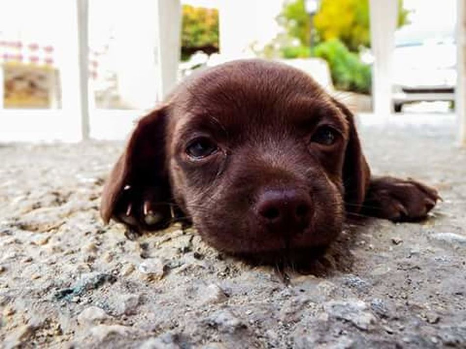 Pets One Animal Looking At Camera Dog Domestic Animals Portrait Animal Themes No People Day Close-up Outdoors Dogslife Dogs Animal Animal Body Part Baby BabyPet .