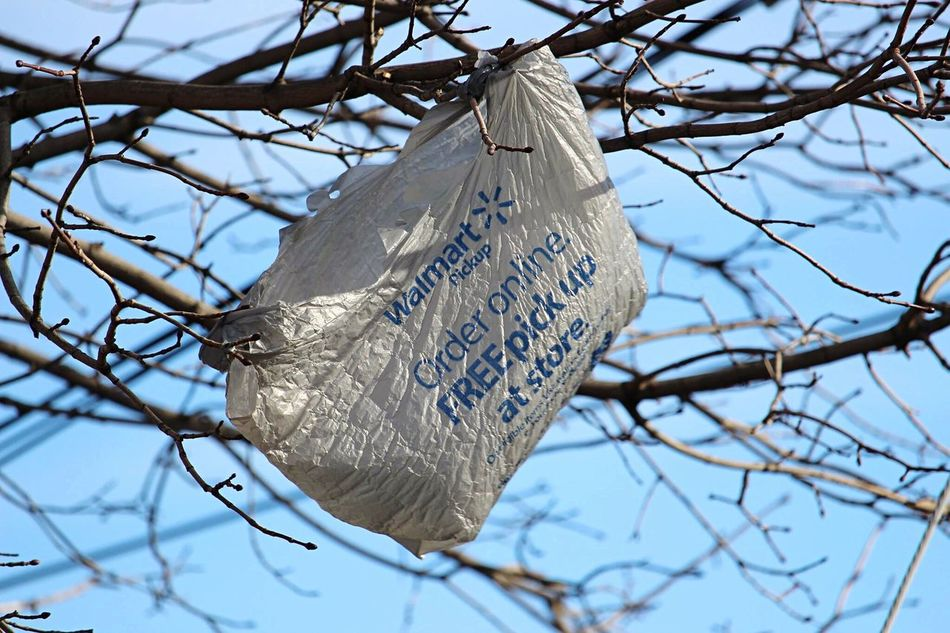 Walmart Grocery Bag Low Angle View Branch Bird Bare Tree No People Tree Day Close-up Outdoors Sky