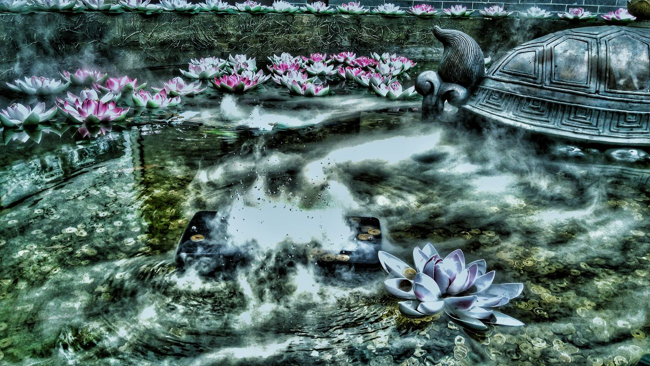 Water Nature Flower Waterfront Close-up Artificialflowers Snapseed Editing  Outdoors