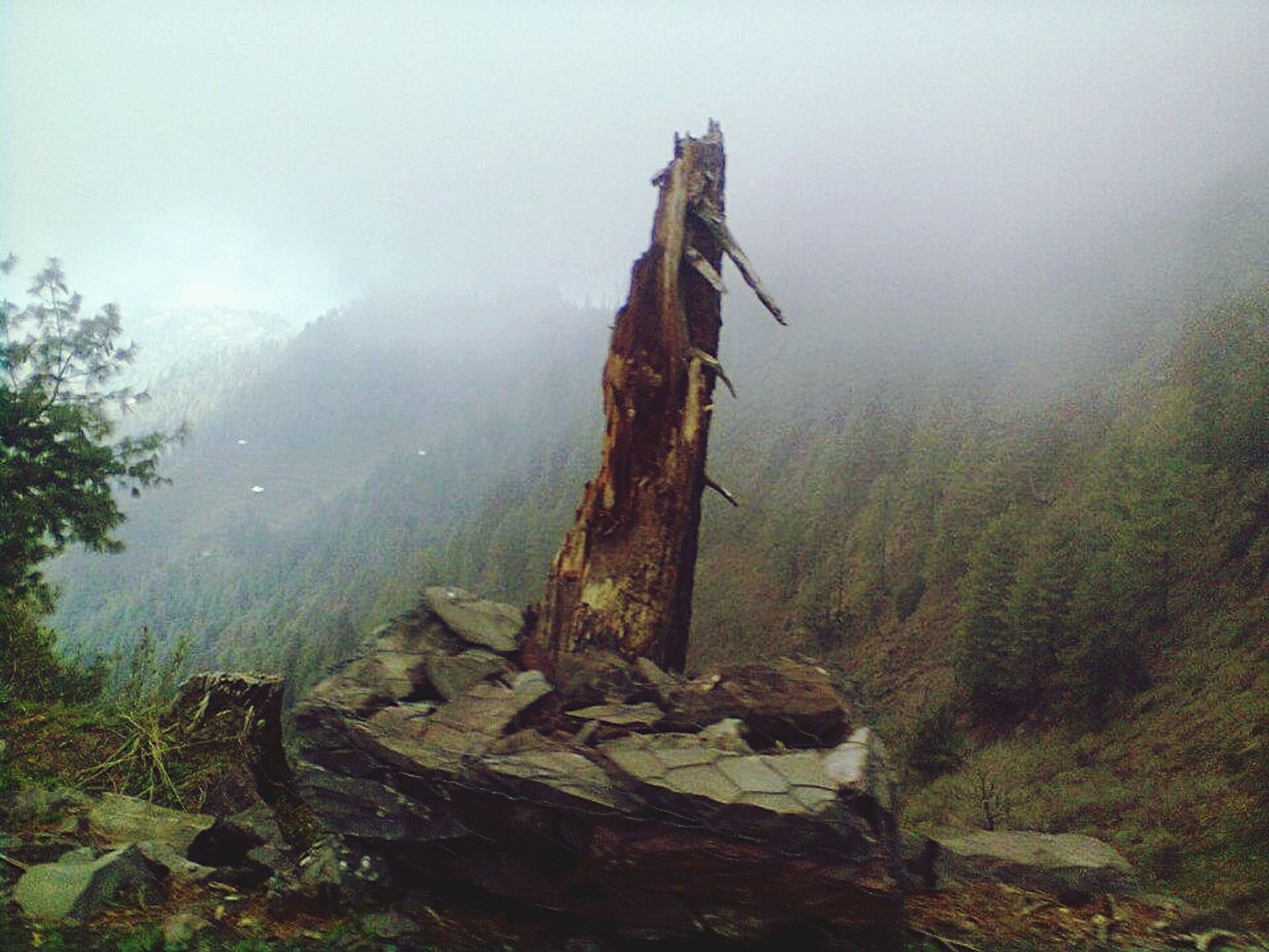 fog, tranquility, foggy, tranquil scene, nature, tree, sky, scenics, landscape, non-urban scene, beauty in nature, rock - object, wood - material, weather, day, forest, outdoors, remote, growth, mountain