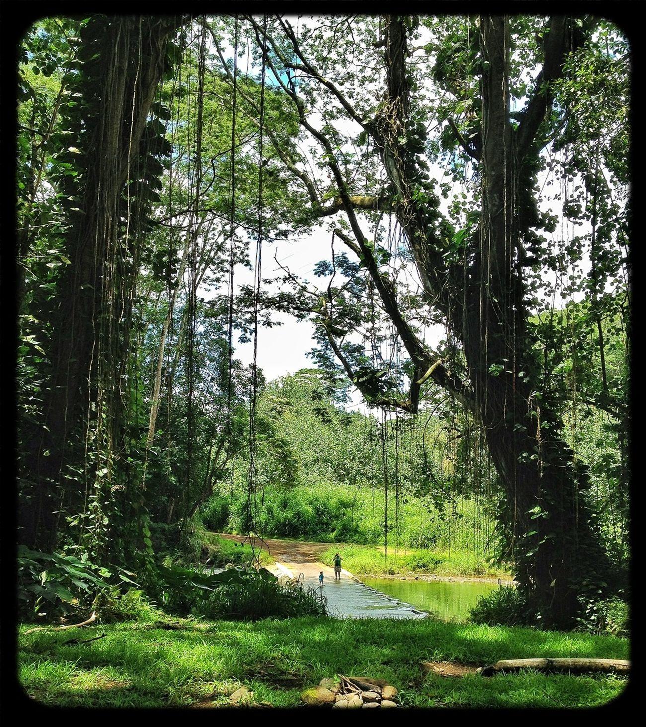 Amazing how small the rain forest makes you feel. Green Jungle Hawaii Kauai