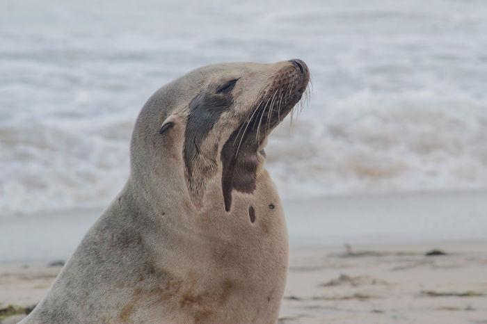 Sea Lion Beach Wildlife Wildlife & Nature Wild Wildlife Photography Encintas Moonlight Beach Showcase April