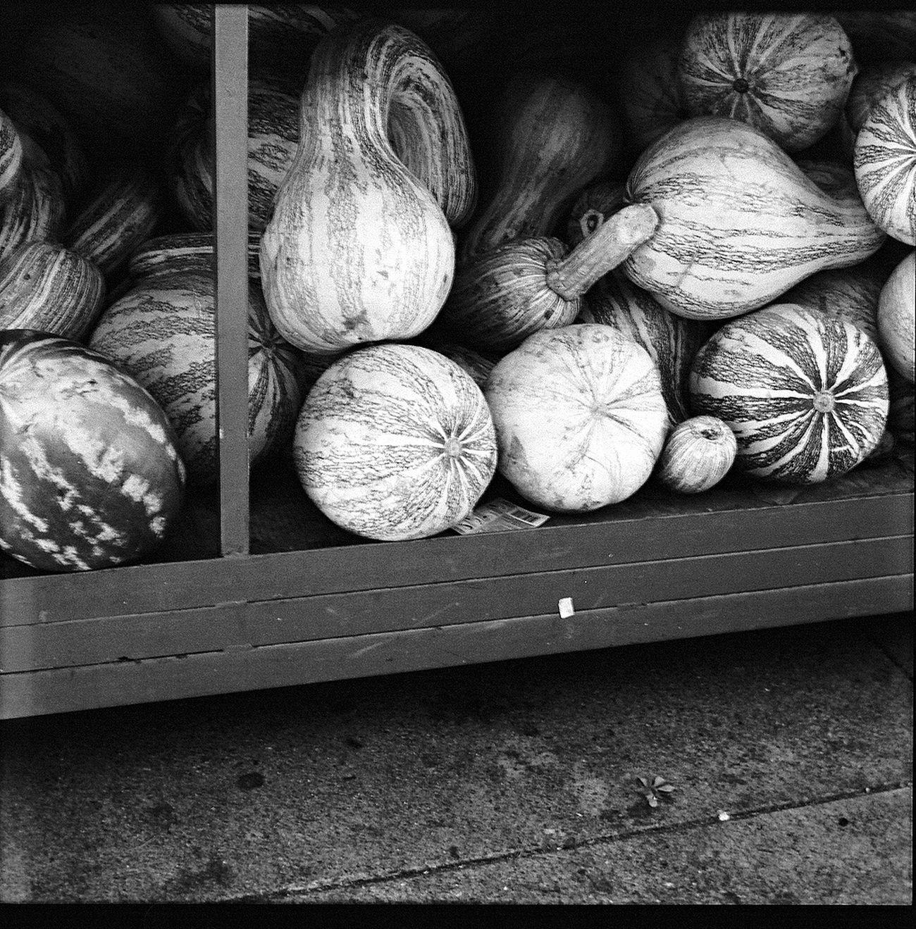 Film Food Squash - Vegetable Square 6x6 Blk N Wht Koduckgirl Belair Panorama