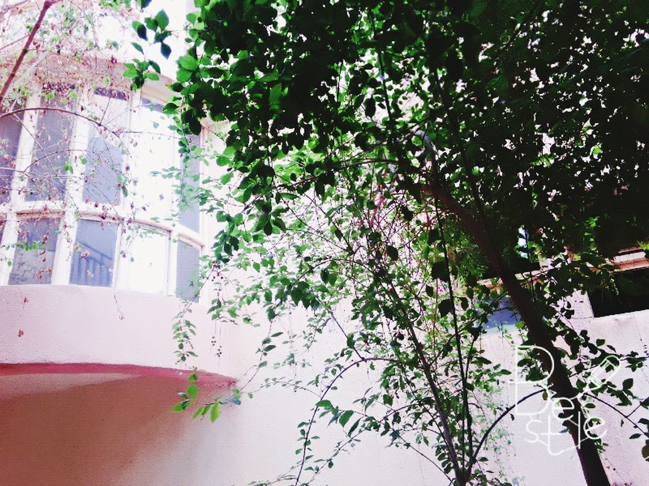 tree, growth, day, branch, no people, nature, outdoors, flower, building exterior, architecture, low angle view, beauty in nature, built structure, fragility, close-up, freshness
