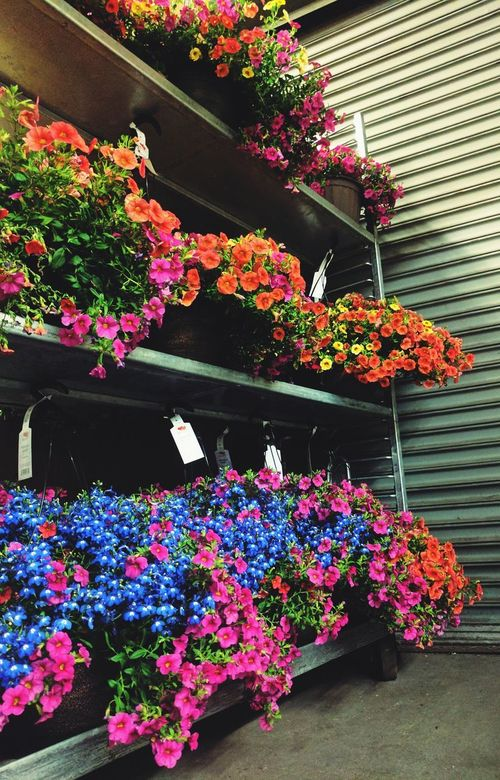 Hanging Baskets Of Flowers Flower Plant Multi Colored Hanging No People Outdoors Fragility Beauty In Nature Backgrounds Visual Feast Details Check This Out Springtime Plant Pick One Choices Choices